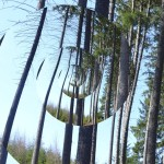 les v okolí Oázy Srdce