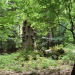 prales - okolí Oáza Srdce
